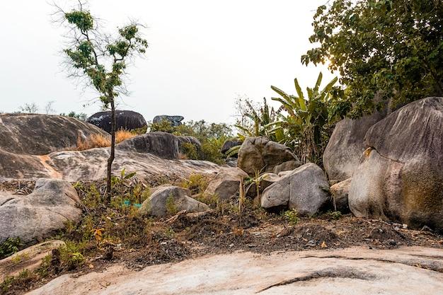 Scenario della natura africana con vegetazione e rocce