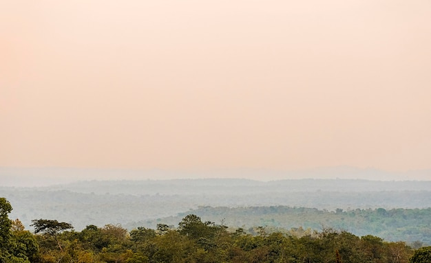 Vista della natura africana con alberi