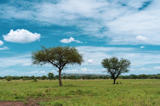 African panorama in serengeti national park