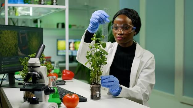 アフリカの研究者は、生物学実験室で働く植物学実験のために苗木を測定します