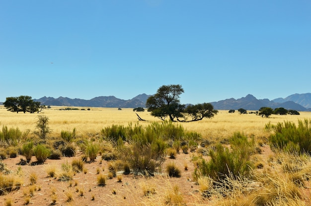 African savanna landscape, namibia, south africa