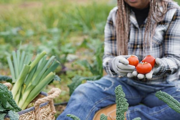 신선한 유기농 토마토를 들고 있는 아프리카 고령 여성 - agrictultre 여성 노동자는 수확 기간을 즐깁니다.
