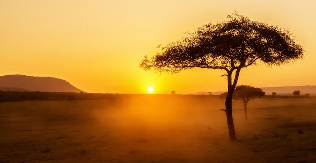 ケニアのマサイマラにあるアカシアの木とアフリカの夕日。