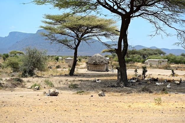 케냐의 덮개에 아프리카 나무