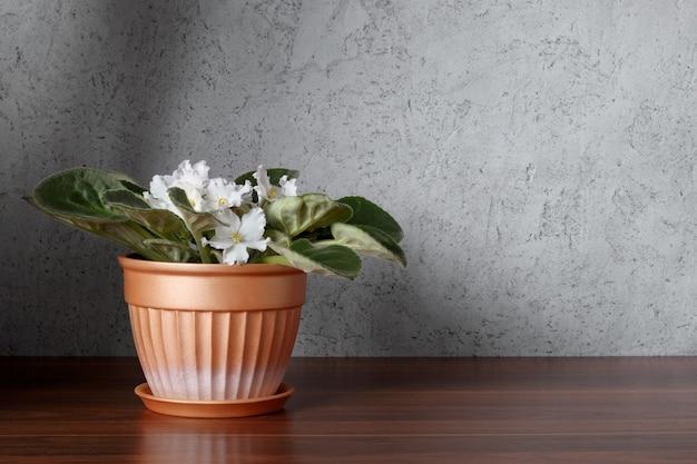벽 근처 나무 선반에 화분에 흰색 꽃과 아프리카 바이올렛. 인테리어 배경입니다.