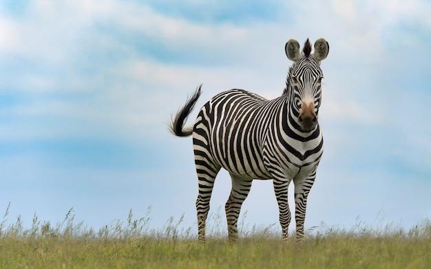 アフリカの野生生物