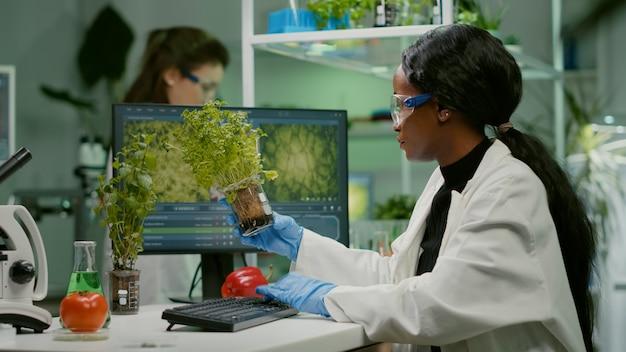 生物学研究所で働くトマトと苗木の遺伝子組み換え作物を分析するアフリカの女性研究者