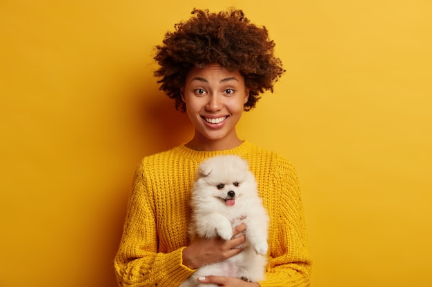 Afro american woman holds dog of breed pomeranian spitz, likes miniature fluffy pet, poses with cute animal against vivid yellow background