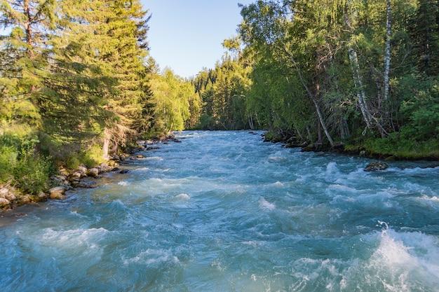 산 강 홍수 후. 알타이, 시베리아. 산 강은 시베리아 타이가의 나무 사이로 흐릅니다.