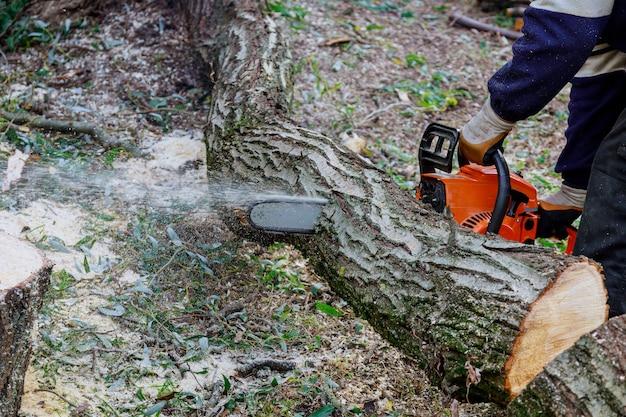ハリケーンの嵐の後、プロの公益事業者が市内で木を伐採し、木に被害を与えました