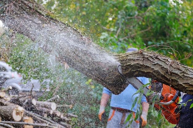После урагана повредили деревья, а профессиональные городские коммунальные службы спилили дерево в городе.
