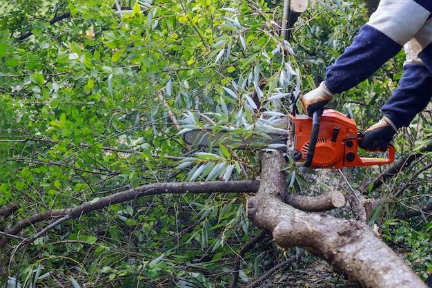 После урагана повредили деревья, а профессиональные городские коммунальные службы спилили дерево в городе