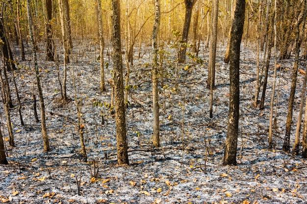 After burnt tree in forest, burnt debris