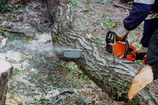 After a hurricane storm damage trees with professional city utilities cutting a tree in the city