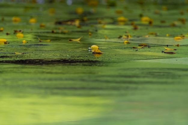 雨上がり、森の葉は水と露に覆われ、背景は緑と黄色