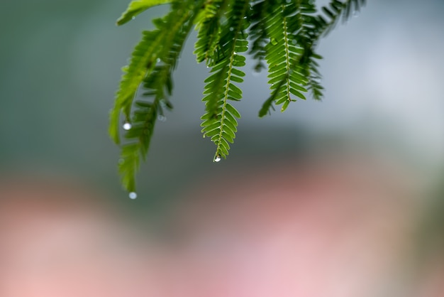 비가 온 후 숲의 나뭇잎은 물과 이슬로 뒤덮이고 배경은 녹색과 노란색입니다.