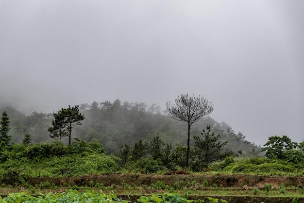 雨上がり、田舎の蓮の池