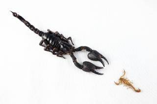 Against the odds  claw