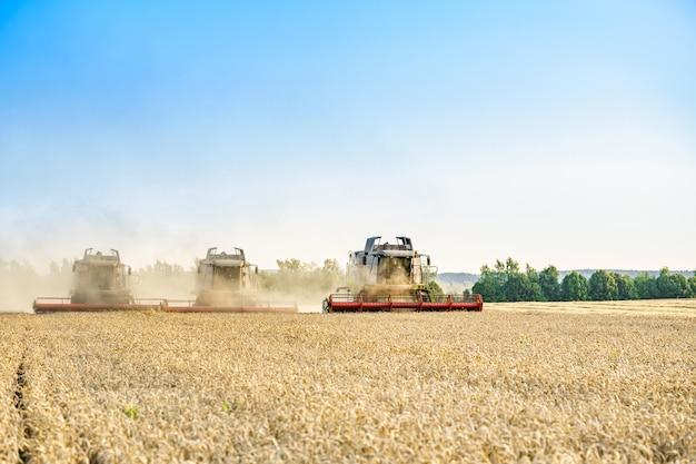 На фоне солнечного летнего дня и голубого неба с облаками комбайн уборка урожая