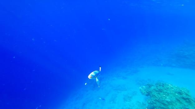 해저를 배경으로 산호 근처에서 수영하는 열대어를 볼 수 있습니다.