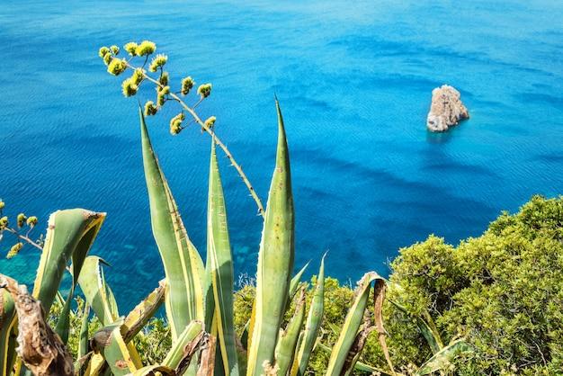 아가베 꽃과 섬 해안에서 열대 바다의 아름다운 전망. 사르데냐, 이탈리아.