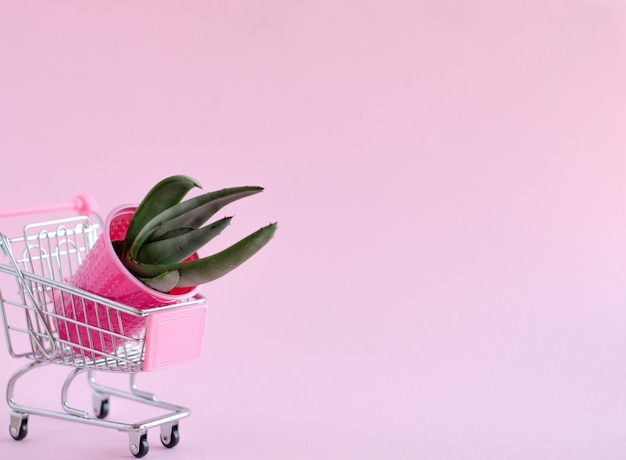Agave leaf cactus in a pink plastic glass lies in a grocery cart on a pink background. isolate, minimalistic trend, horizontal image.