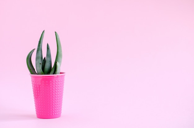 Agave leaf cactus in a pink plastic glass on a pink background. minimalism, vertical image.