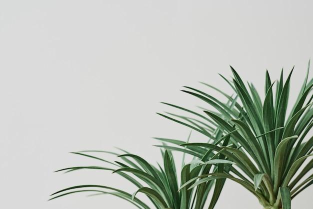 Pianta della palma dell'agave su fondo grigio