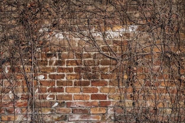 古い工場の高齢者の赤レンガの壁
