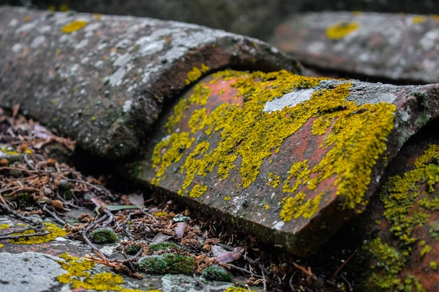 Aged roof tiles with lichens