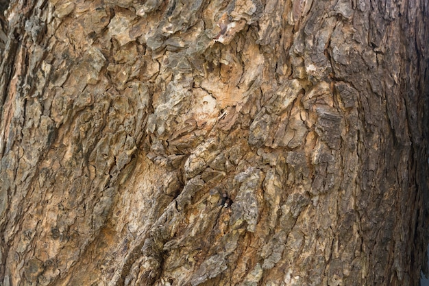 Фоновая текстура коры дерева в возрасте, узор шероховатой деревянной корки