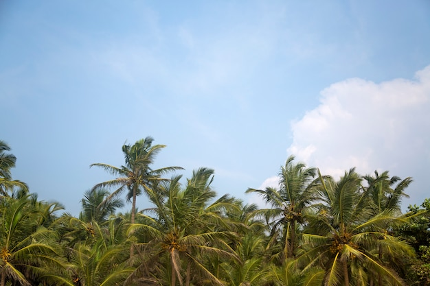 Agonda beach at goa, india