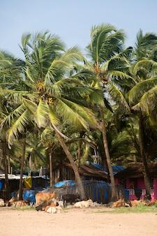 Agonda beach in india