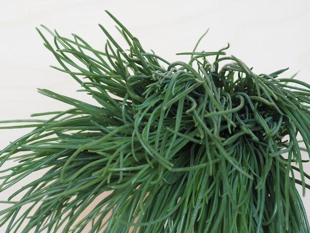 Agretti (salsola soda) vegetables food