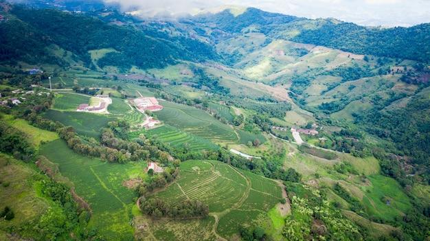 農村緑茶山チェンライタイ