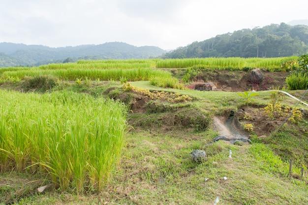 Сельскохозяйственные угодья в горах