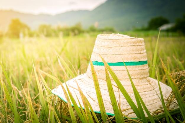 논에 모자와 농업 배경