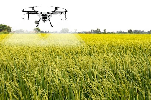 Сельскохозяйственные дроны для опрыскивания рисовых полей в популярном таиланде