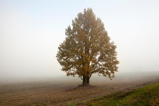 Сельскохозяйственное поле и растущее на нем дерево в осенний сезон. утреннее время с туманом.