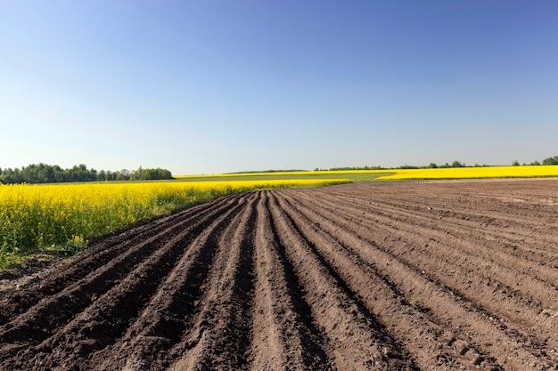 じゃがいもを栽培する農地。畝間