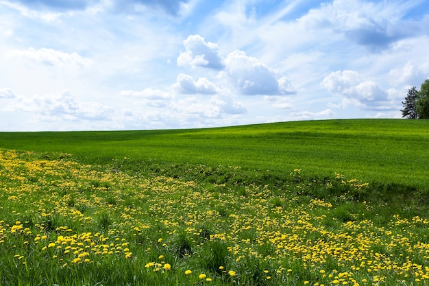 어린 풀이 자라는 농업 분야. 밀