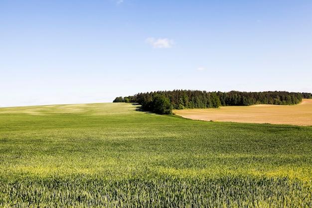 어린 풀이 자라는 농업 분야.