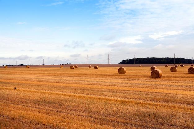 穀物を集めた後、藁の山が横たわる農地