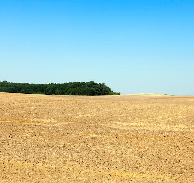 新しい作物のために土壌が耕作される農地。青い空と背景の森。