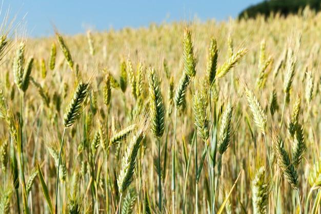사람이나 동물의 식량에 필요한 제품의 작물이 자라는 농업 분야