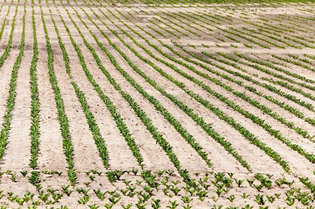 Сельскохозяйственное поле для выращивания сельскохозяйственных культур