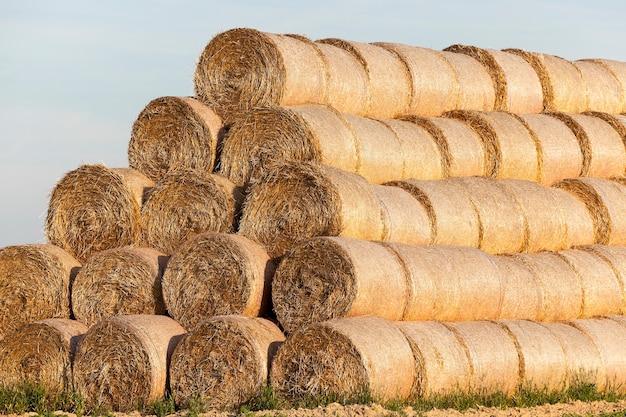 밀 수확 후 밀짚 건초 더미, 곡물 밭, 농업 및 유기농 식품, 가을 시즌, 푸른 하늘이 누워 남아있는 농업 분야