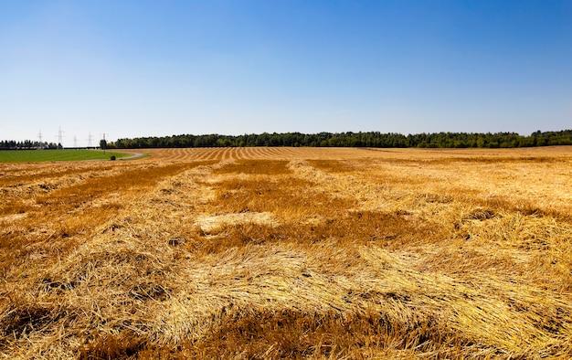 Сельскохозяйственное поле, на котором проводится уборка пшеницы