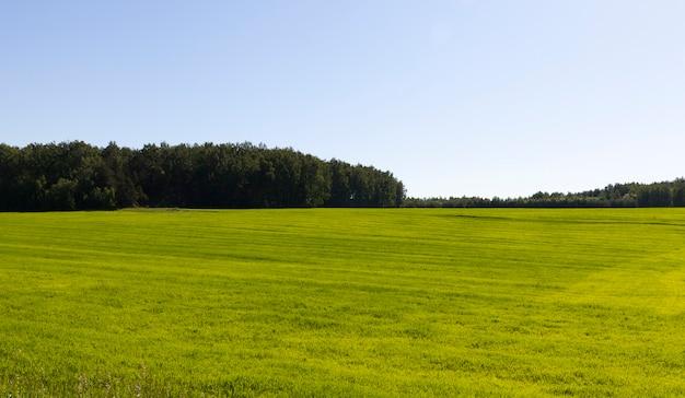 緑の草が植えられた農地、春の晴天、豊かな色