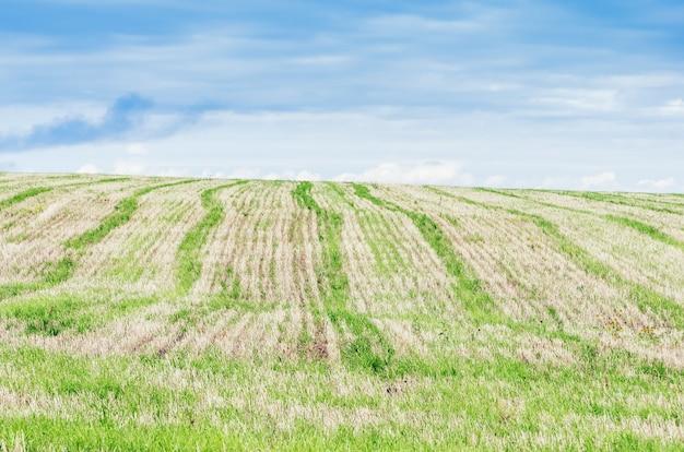 農業分野。無精ひげ